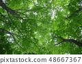 สดสีเขียว 48667367