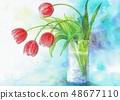 수채화 튤립 꽃 48677110