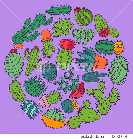 Succulents decorative cacti green plants vector illustration. Nature botanical houseplant floral 48682346