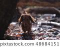 达克斯猎犬Kaninhaen可爱 48684151