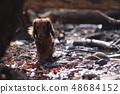 达克斯猎犬Kaninhaen可爱 48684152