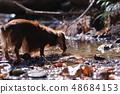 达克斯猎犬Kaninhaen可爱 48684153