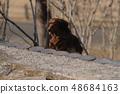 达克斯猎犬Kaninhaen可爱 48684163