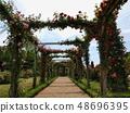 開花在曲拱的玫瑰 48696395