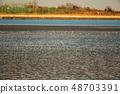 Wild bird playing in Sone Tidal Flats 【Fukuoka Prefecture】 48703391