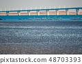 Wild bird playing in Sone Tidal Flats 【Fukuoka Prefecture】 48703393