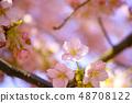 春天的櫻花樹 48708122