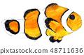 小丑魚 48711636
