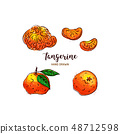 Tangerine drawing Vector hand drawn mandarin, Watercolor colorful tangerines. Vector isolated icons 48712598