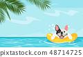 summer season  background 48714725