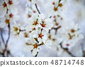 Spring blossoms background 48714748