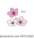 Sakura flower, hand draw sketch vector. 48721662