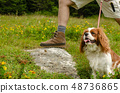 Hiker's foot and dog 48736865