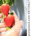 딸기 딸기 따기 이미지 48739627
