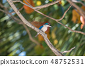 Bird (White-collared kingfisher) in a nature wild 48752531