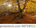 Big tree in the wood 48758521