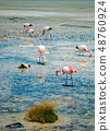 Flamingos in the lake 48760924