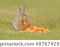 Cute rabbit with orange carrot in the grass 48767429