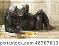침팬지 휴식 48767813