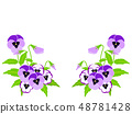 三色堇和中提琴框架 48781428