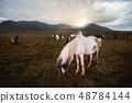 สัตว์,สัตว์ต่างๆ,เหมือนม้า, 48784144