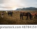 สัตว์,สัตว์ต่างๆ,เหมือนม้า, 48784150