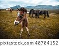 สัตว์,สัตว์ต่างๆ,เหมือนม้า, 48784152