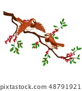 Two birds on a branch with red berries isolated on white background. Vector cartoon close-up 48791921