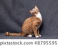 고양이 48795595