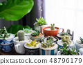 Cactus in a beautifully decorated pot on table. 48796179
