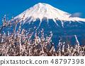จังหวัดชิสึโอกะภูเขาฟูจิและดอกพลัม 48797398