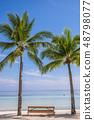 필리핀 보홀의 야자수 나무 48798077