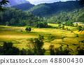 golden field 48800430