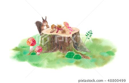 森林朋友 - 樹樁,松鼠和堅果 48800499