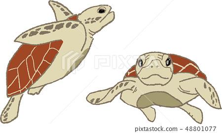 바다 생물 (거북이) 48801077
