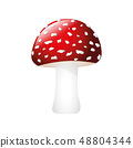 poisonous red fly agaric isolated on white background 48804344