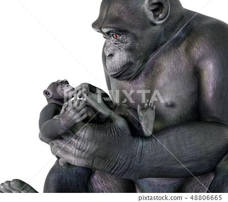 Chimpanzee babysitting 48806665
