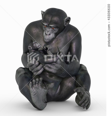 Chimpanzee babysitting 48806680