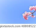 河津樱花和蓝天的早春[福冈] 48808522