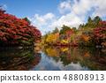 Karuizawa Kumba Pond 34 with bright autumn leaves 48808913