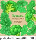 broccoli vector frame 48808983
