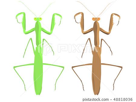 Mantis Illustration 48818036