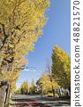 Landscape of Hachioji-shi, Tokyo November Autumn leaves Koshu Kaido National highway No. 20 Ginkgo Tree 48821570