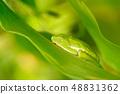 동물, 개구리, 잎 48831362