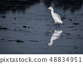 White egret reflected over dark polluted water 48834951