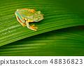 야생, 동물, 잎 48836823
