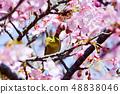 Meiro和Sakura 48838046