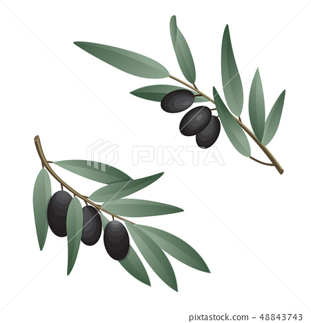 Olive branch in watercolor style. Design for olive oil, natural cosmetics, health care products. 48843743