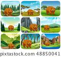 Brown bear in nature scenes 48850041