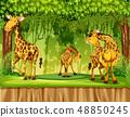 野生生物 动物 长颈鹿 48850245
